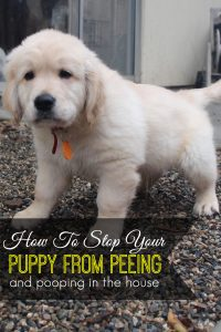 How To Stop A Puppy From Peeing And Pooping In The House
