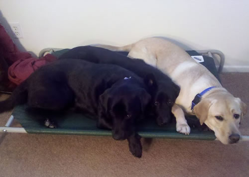 Coolaroo Dog Bed