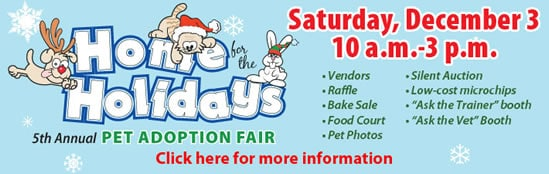 Home for the holidays pet adoption fair