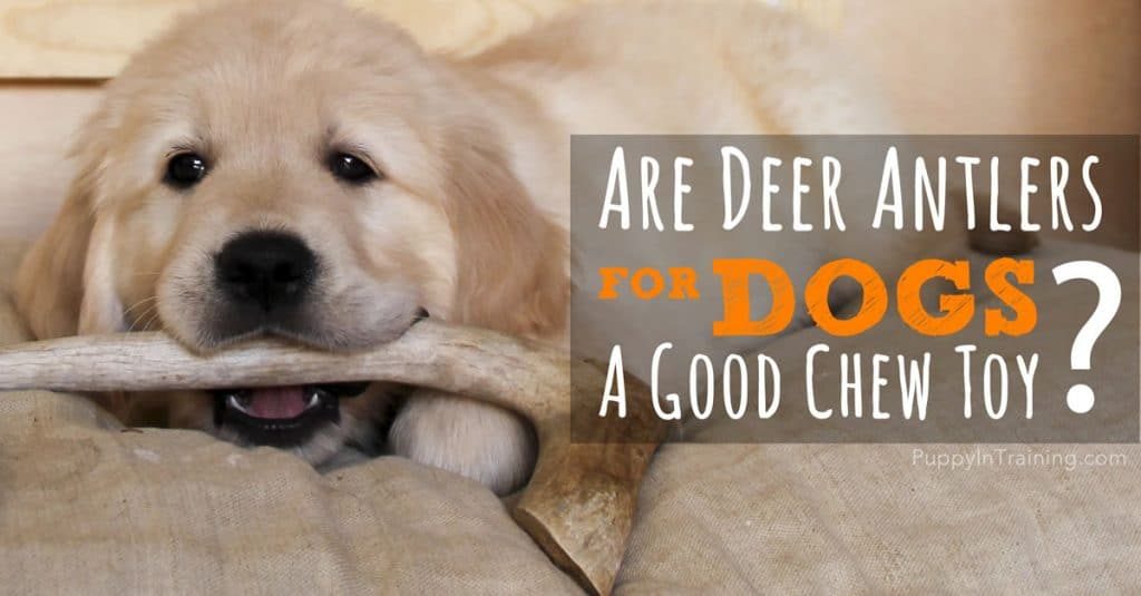 Are deer antlers for dogs a good chew toy?