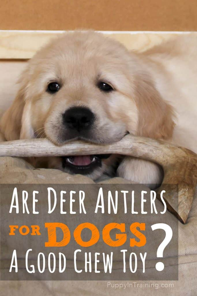 So what do you think? Are deer antlers for dogs a good chew toy?