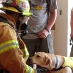Puppy With Firefighter