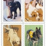 Dog Postage Stamps