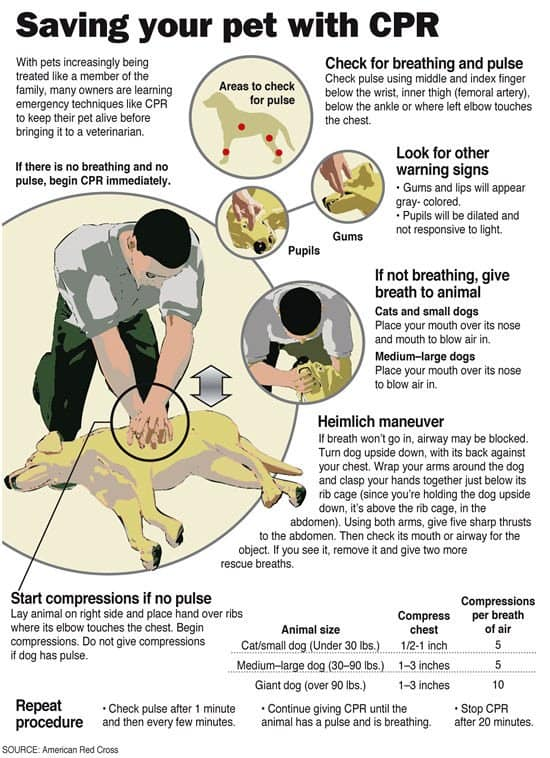 Do You Know How To Perform Dog Cpr