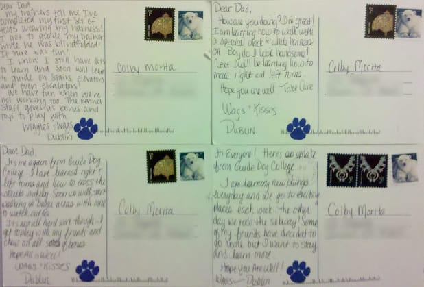 Guide Dog Training Postcards From Dublin