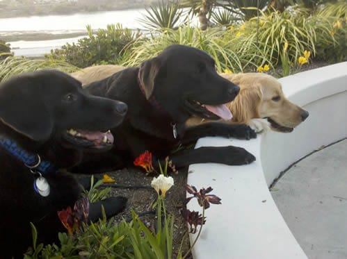 Benefits Of Owning A Pet - My 3 Dogs: Linus, Stetson, Apache