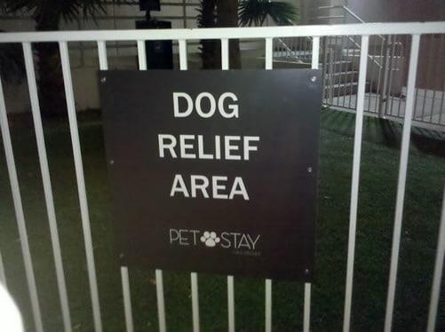 Pet Friendly Hotels In Las Vegas Area