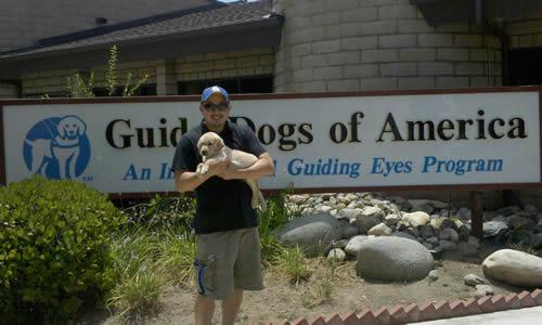 Dog Training Schools