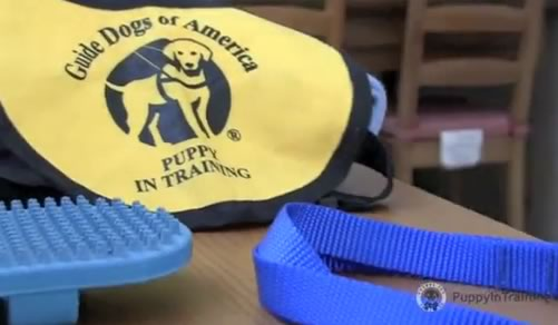 Puppy Starter Kit