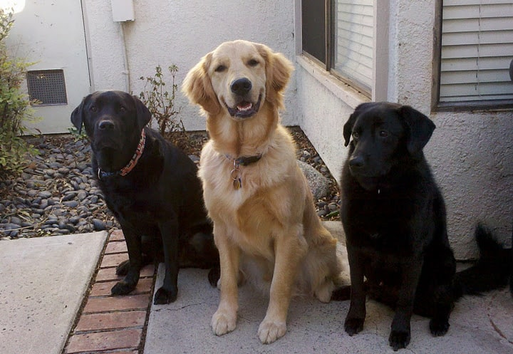 Green Dogs! - Stetson, Apache, and Linus