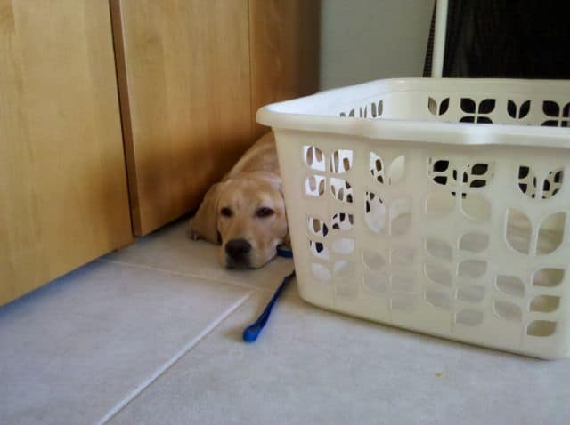 Puppy Laundry Day