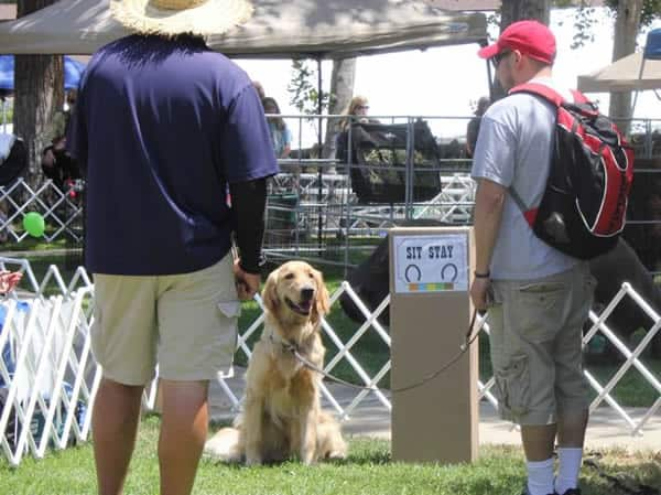 Puppy Trials