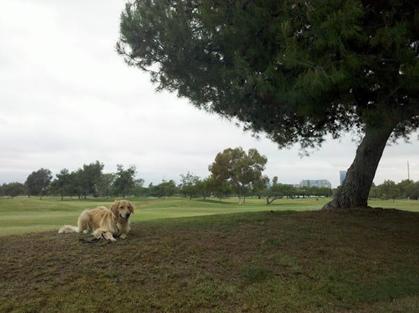 Apache Golf Course
