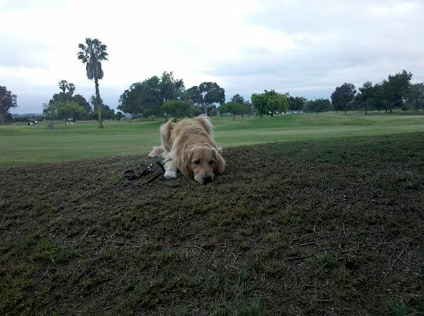 Apache golf course