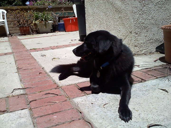 Linus Sunbathing
