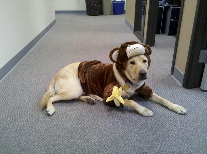 Dublin Monkey Halloween Dog Costume