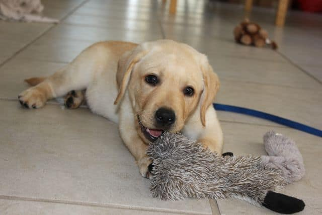 Toby with his new toy