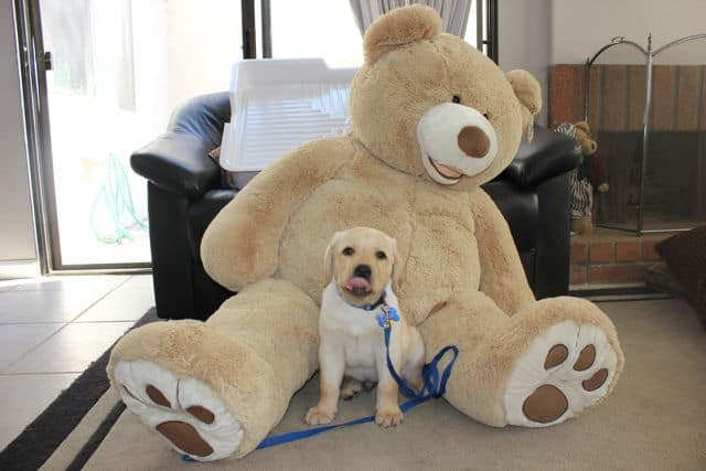 Toby and the giant teddy bear