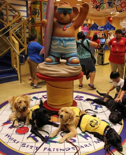 Build A Bear With Guide Dog Pups