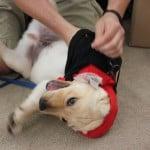 Puppy Mischief