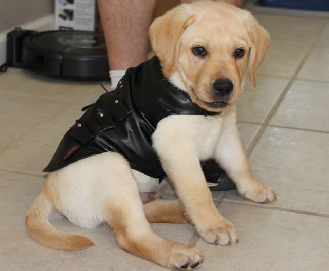 Bret Michaels Pets Rock Pleather Vest