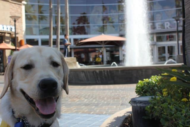 Journey at the District Water Fountain