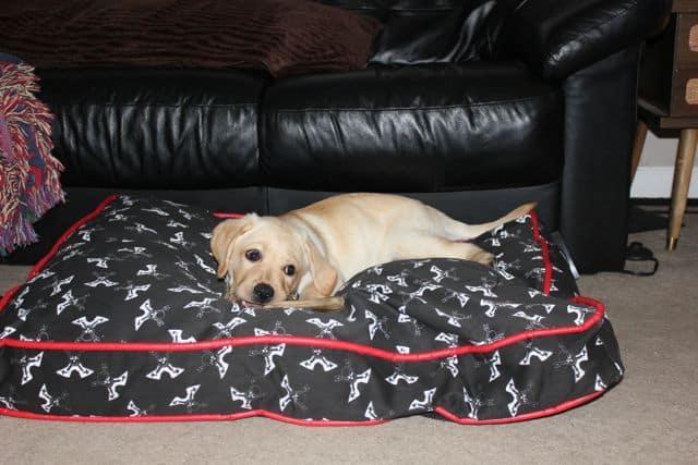 Toby's Rockin Dog Bed