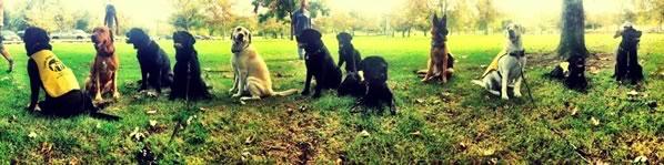 Puppy socialization at Irvine Park