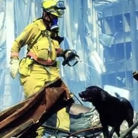 Remembering The Dogs From 9/11