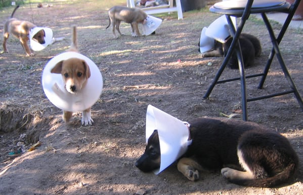 Puppy Coneheads