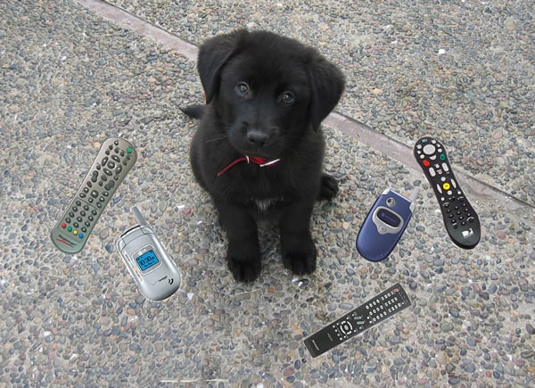 Aussie puppy likes eating electronics