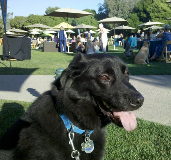 Yappy Hour Ritz Carlton With Linus