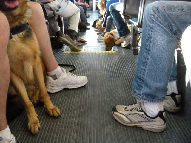 OCTA Service Animal Training