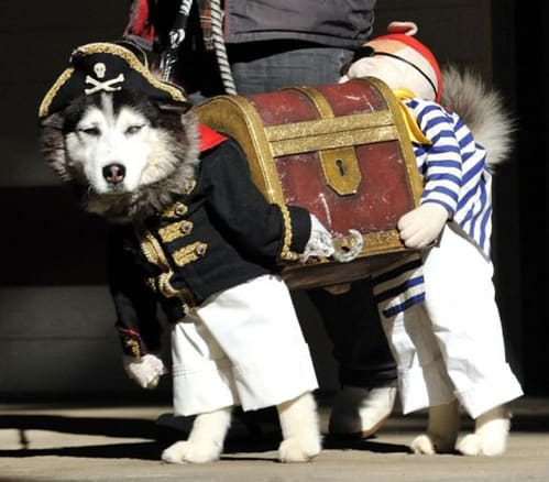 Husky Treasure Chest Dog Halloween Costume