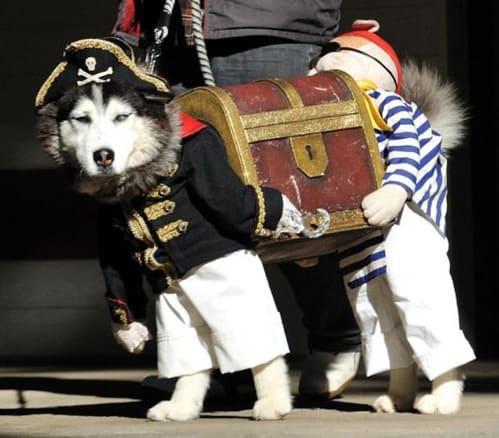 Husky Treasure Chest Dog Halloween Costume