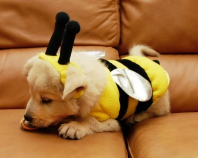 Cute Puppy Bumble Bee Dog Costume