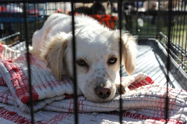 Want To Adopt A Puppy?  Try PetFinder.com!