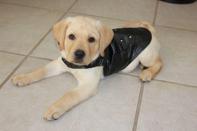 Cutest Dog Costume