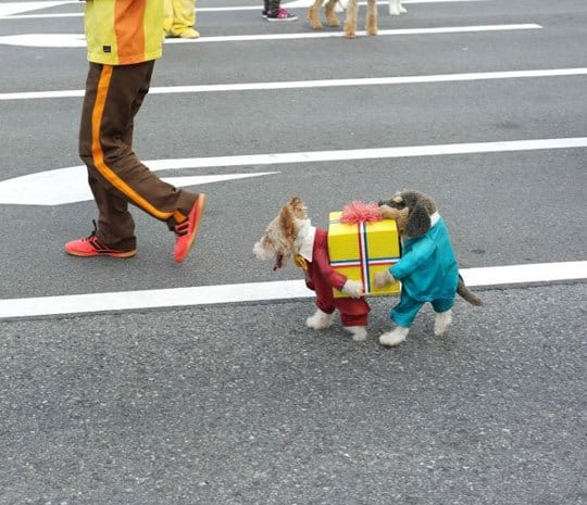 Cute gift carrying puppy dog costume