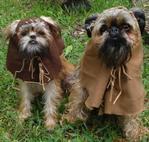 how to make ewok dog costume