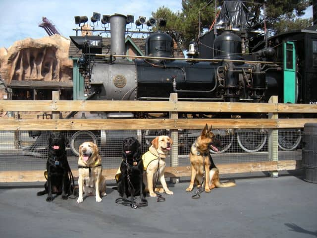 Pups at Knott's Berry Farm in front of the train