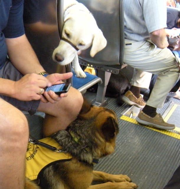 Service Dog Bus Training