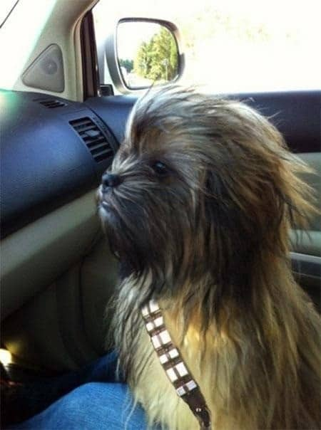 Star Wars Chewie Dog Costume & 5 Awesome Star Wars Dog Costumes