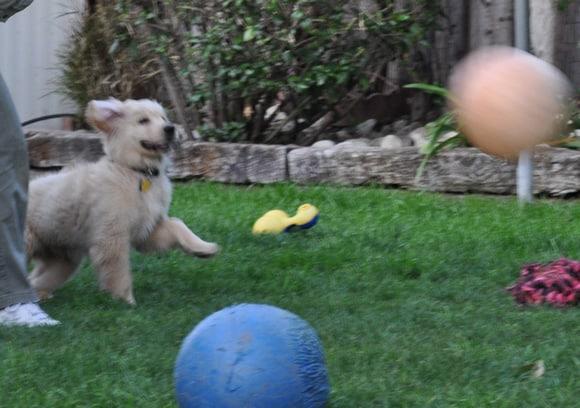 Apache, Fetch!