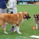 Dog Leash Aggression