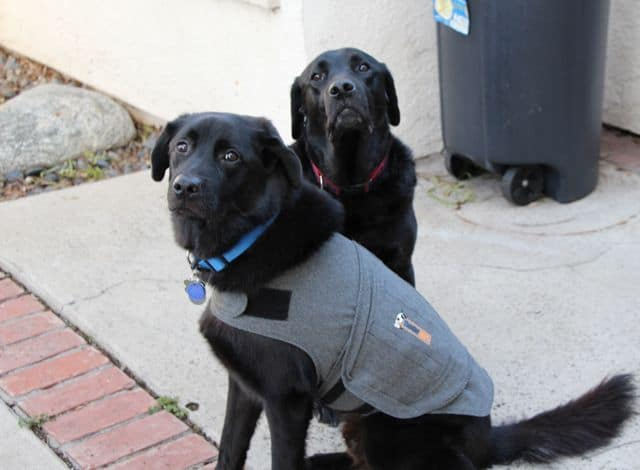 Does The Thundershirt Solve Dog Leash Aggression Problems