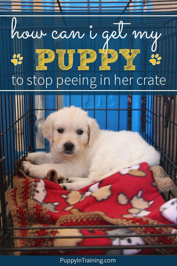 I leave my puppy in her crate for less than an hour and she has a potty accident. How can I get my puppy to stop peeing in her crate? There are several things you can do to help stop your puppy from having pee and poop accidents in the crate. Starting with… #peeincrate #poopincrate #cratetraining #pottyaccidents #peeingincrate #cratetrainingaccidents #cratetrainingpuppy