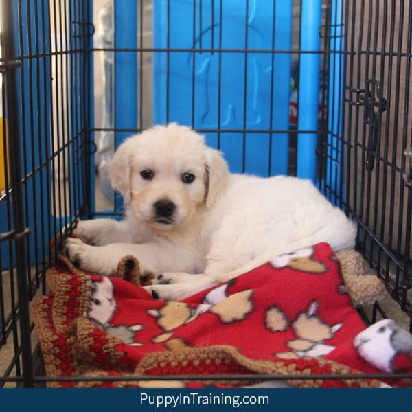 How can I get my puppy to stop peeing in her crate?