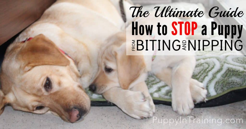 Stop a puppy from biting and nipping
