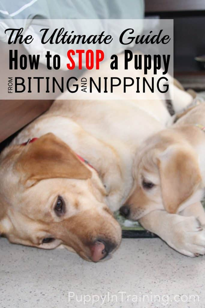 How to stop your puppy from biting and nipping